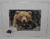 "MBA #3535-0135   ""2001 Double Matted With Fancy Bear Foot ""Bear Stare"" Alissa Crandall Bear Photo"""