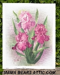 "+MBA #5611-0119  ""1989 Crystal Skelly Pink Iris Litho #IM101"""