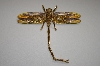 **MBA #19-007  Gold & Brown Enameled Crystal Dragonfly Pin/Pendant