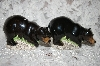 ** Natures Window Black Bear Salt & Pepper Shakers