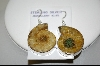 +MBA #7674 Ammonite Fossil Shell Sterling Pierced Earrings